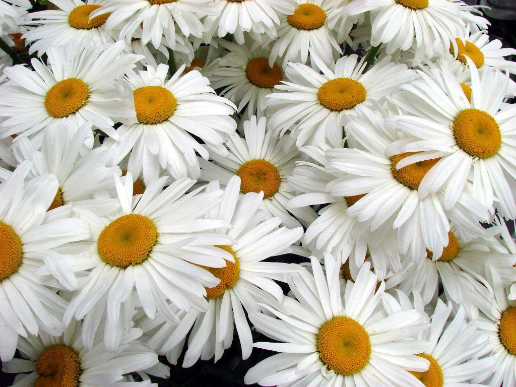 Elovecur Flowers Tulsa