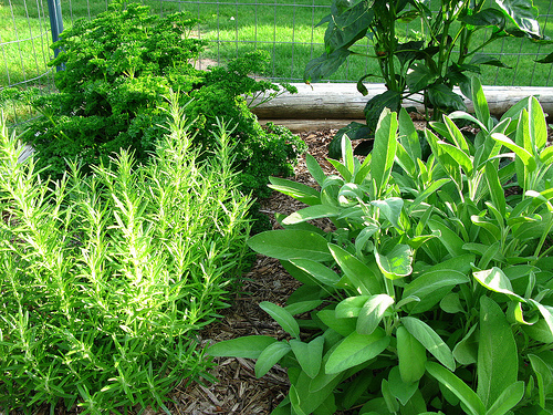 Garden Design Garden Design with Growing Herbs Gardening