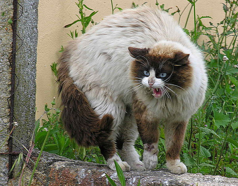 Constipation in Cats