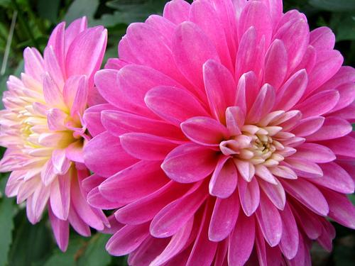 Summer flower spring and summer flowers spring and summer flowers mightylinksfo