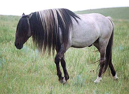 My Animal bios 25471