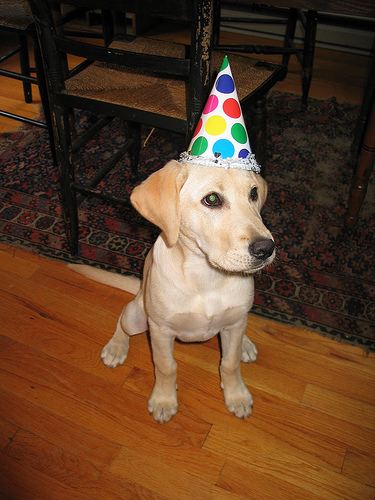 This puppy is ready for a party.