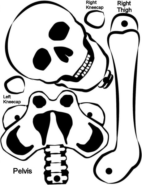 Esqueleto Dibujo Para Armar Esqueleto Humano Para Armar