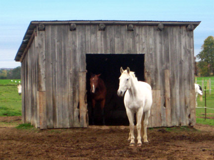 how build run shed horses
