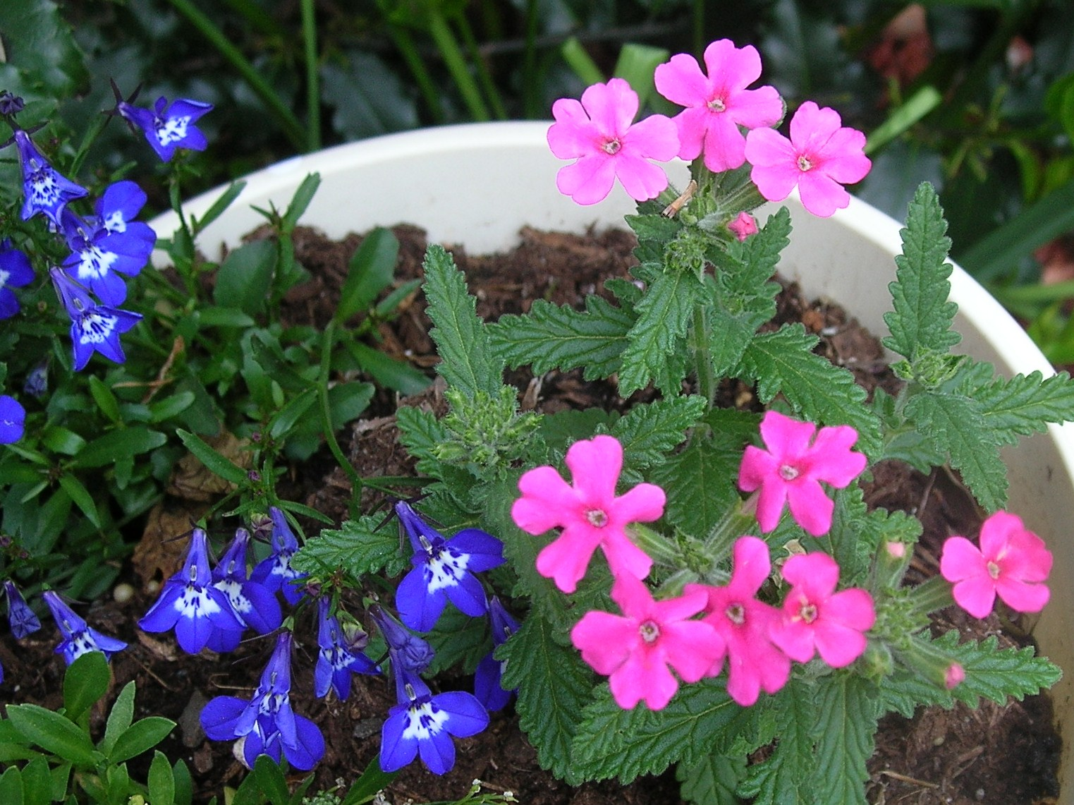awesome best flowers for pots Part - 5: awesome best flowers for pots design