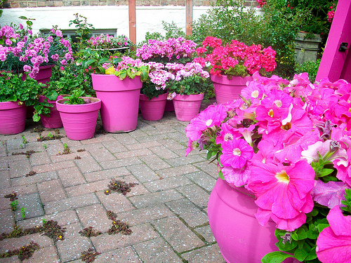 Ideas for Planting Flower Pots Garden Guides
