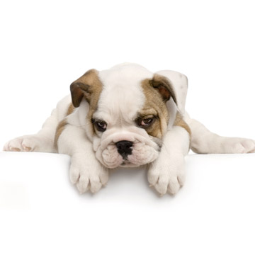 Signs of Anemia in Puppies