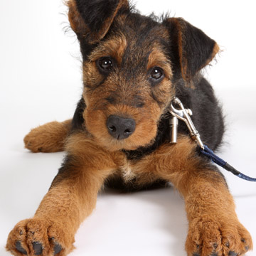 Help your puppy with teething pain.