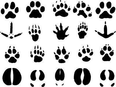 Como dibujar huellas de animales - Imagui