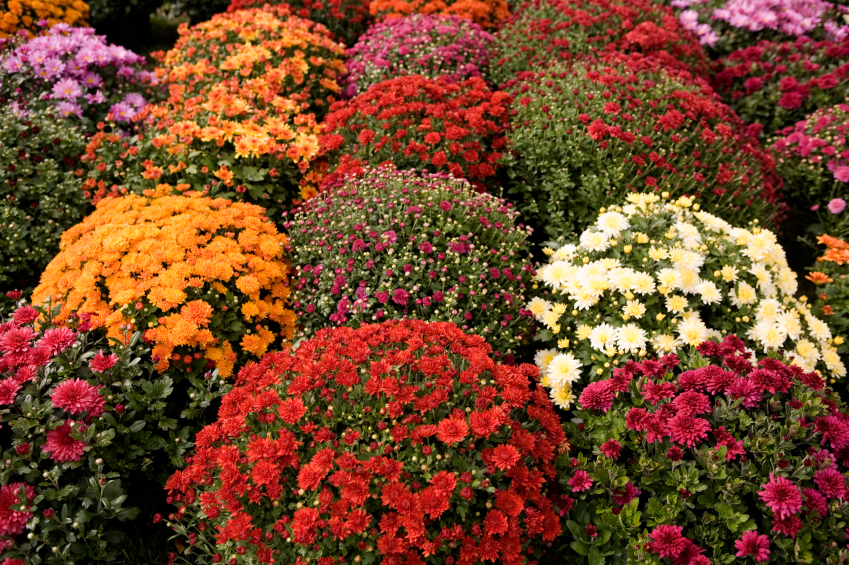 Fall Flower Garden Ideas The Gardening