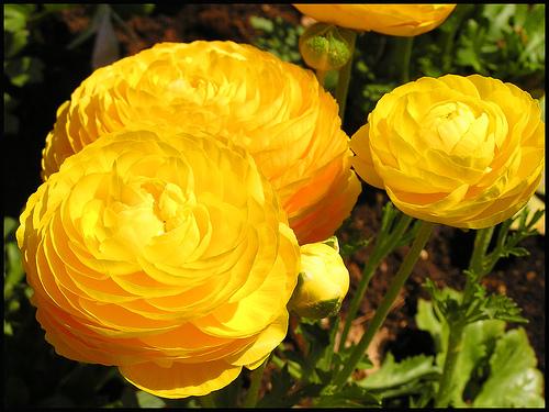 Perennial Flower Garden Ideas 47 gorgeous perennial garden ideas Perennial Flower Garden Ideas