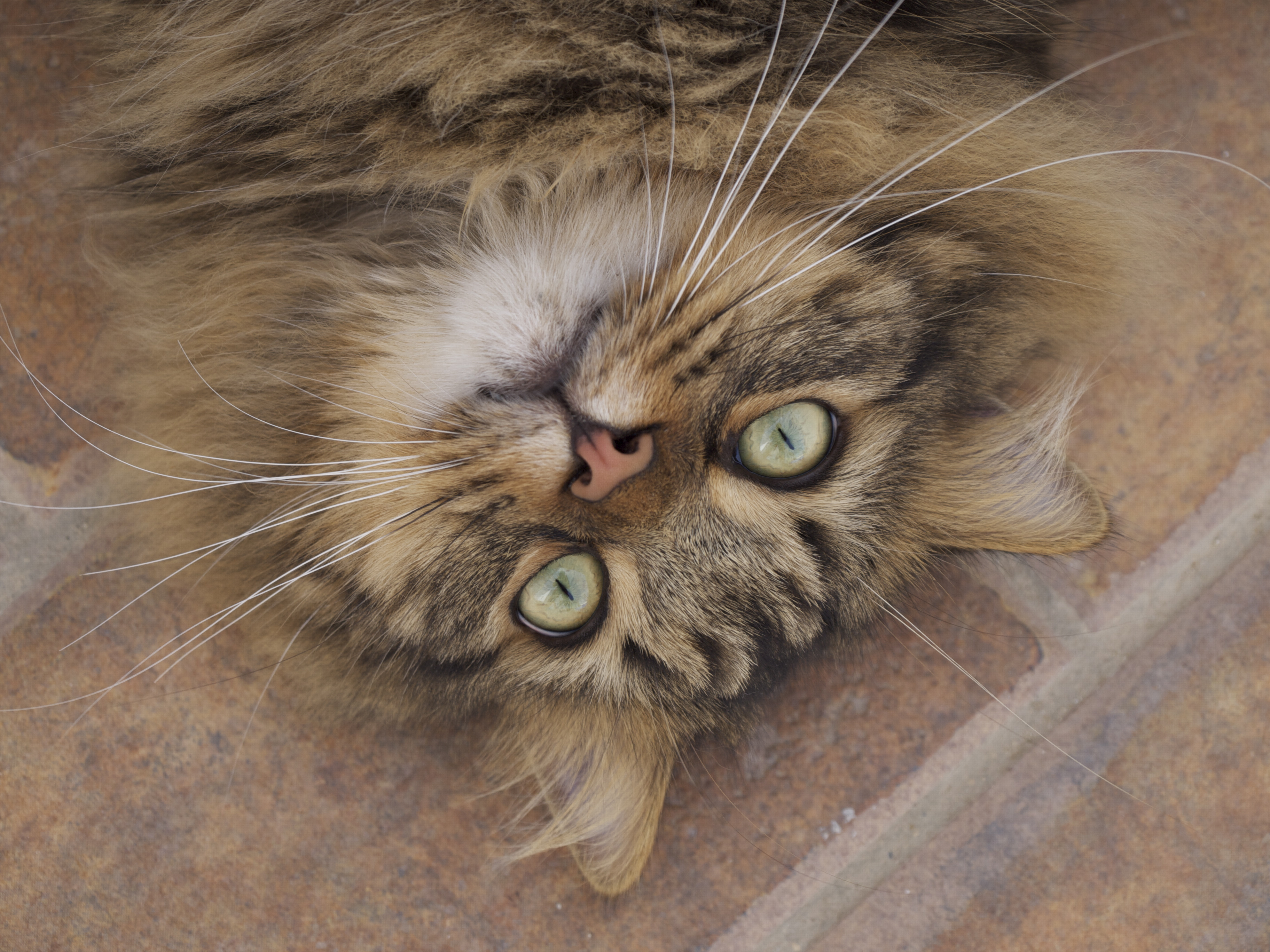 Natural Remedies for Cat Health