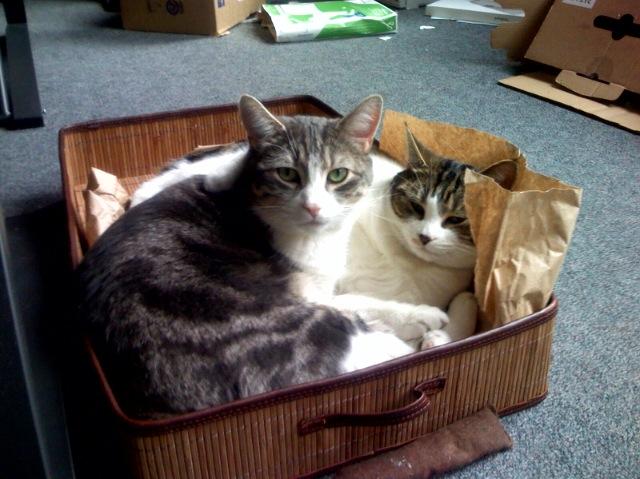 Health Effects of Cat Litter Box