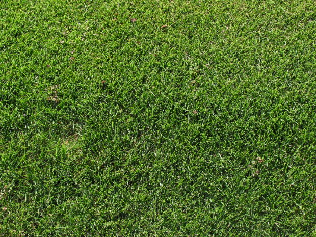How Long Does It Take for Bermuda Grass Seed to Germinate ...