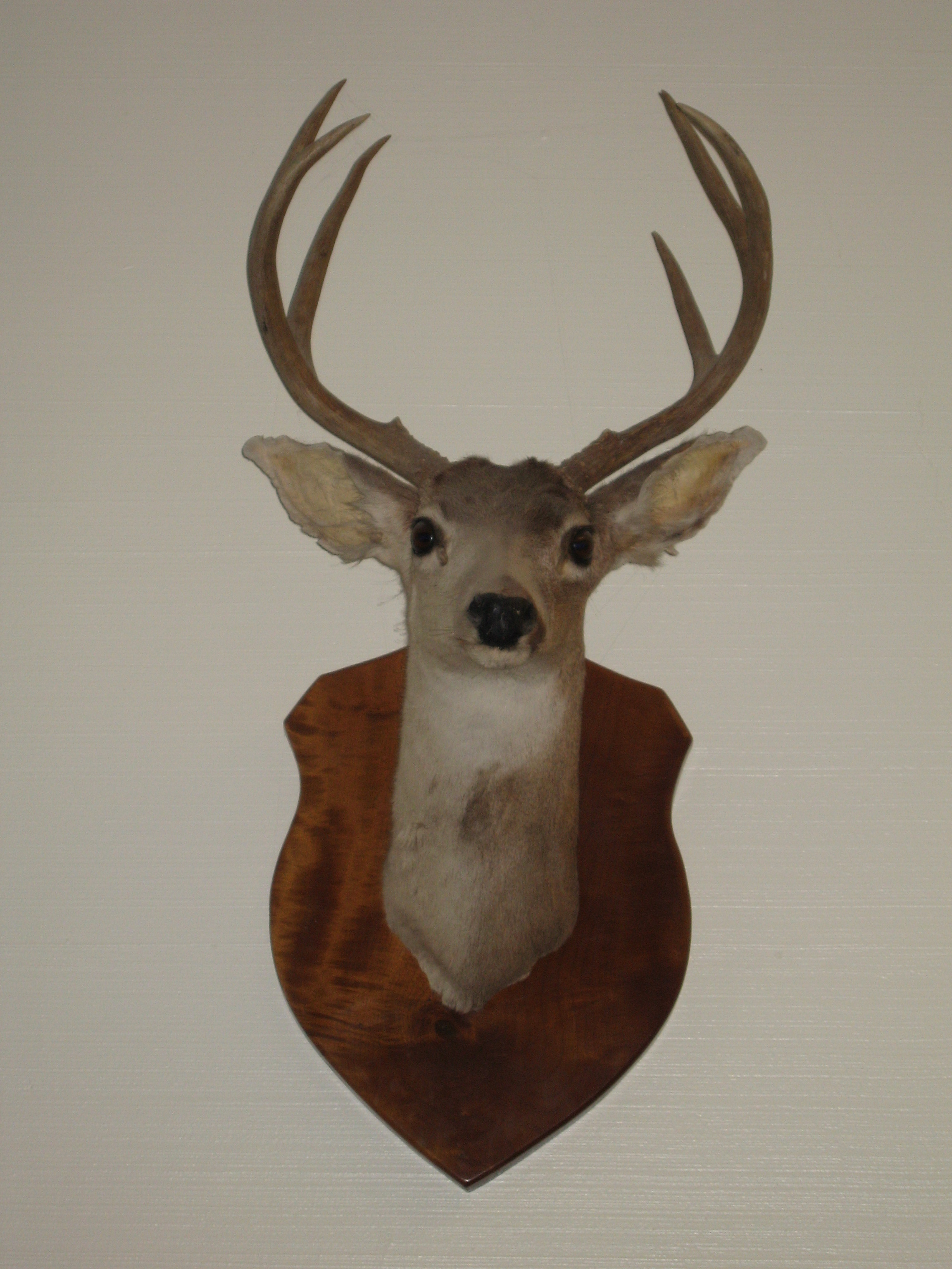 How to make stag antler decorations ehow uk for Antlers for decoration