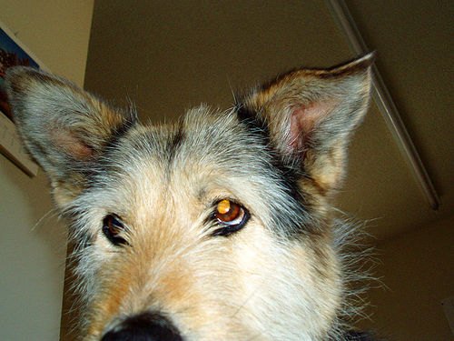 Antibiotic Ointment For Dog Ear Infection