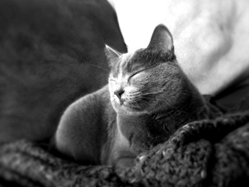 Ivermectin Dosage For Cats