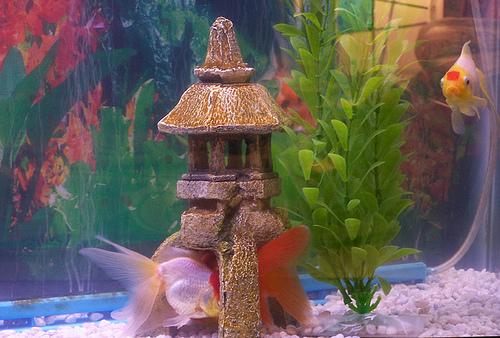 Aquarium decoration tips ehow uk for Little mermaid fish tank decor