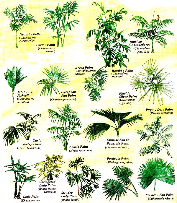 Identify this house plant miscellaneous toytown germany - House plant identification guide by picture ...