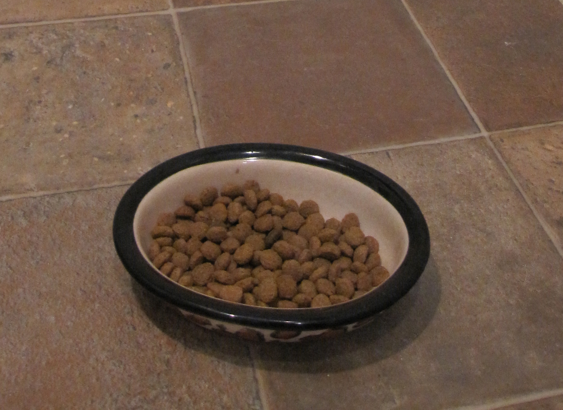 iams dog food review the daily puppy