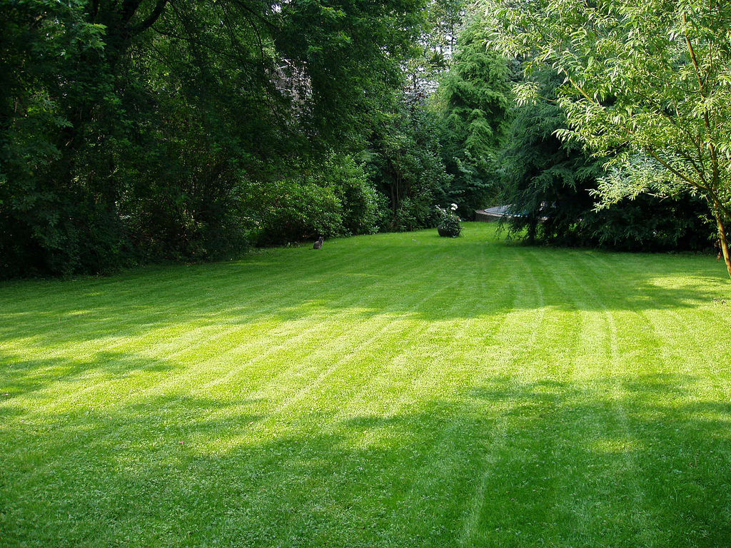 How much grass seed per square foot garden guides for Landscaping your garden