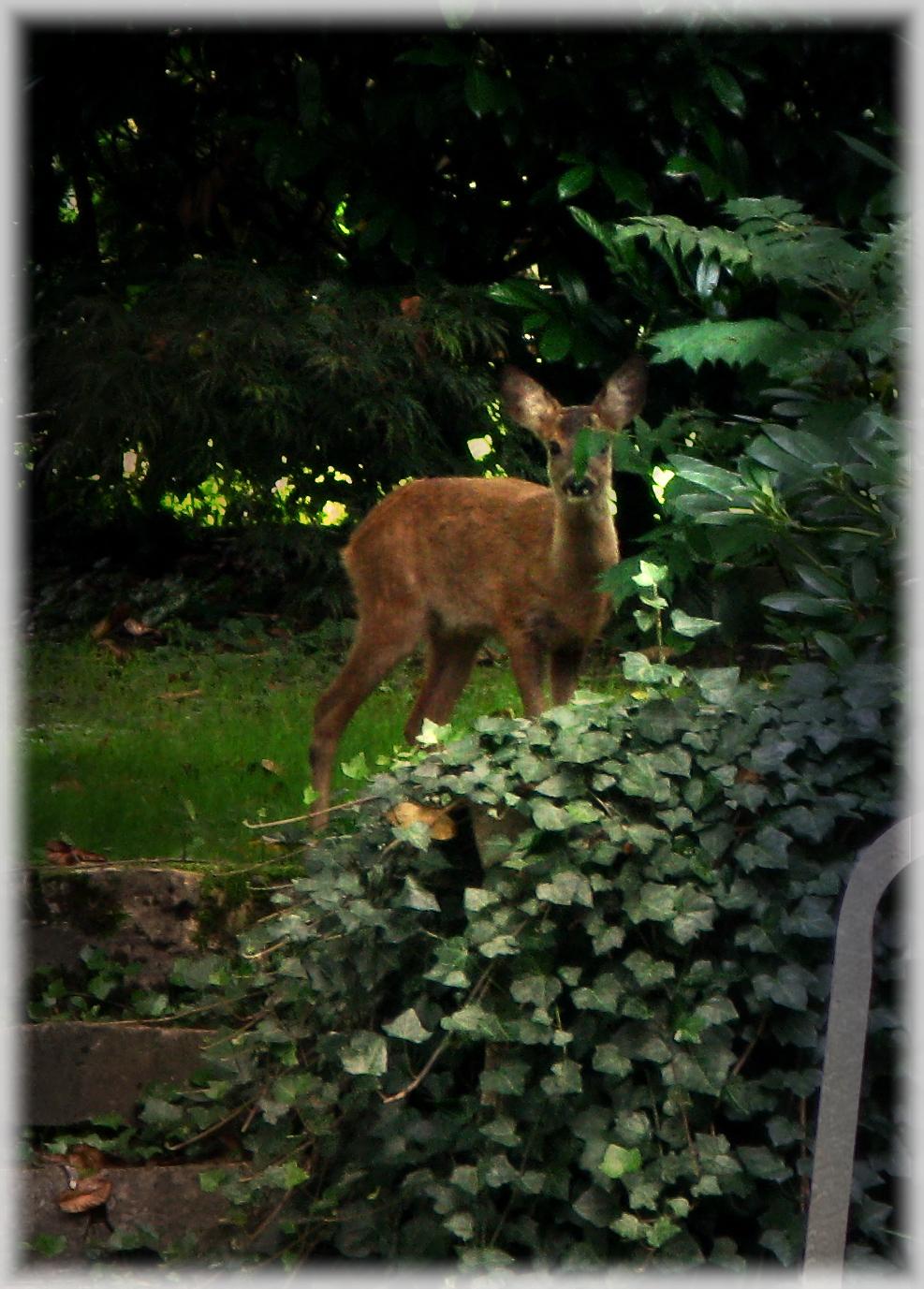how to make deer repellent garden guides
