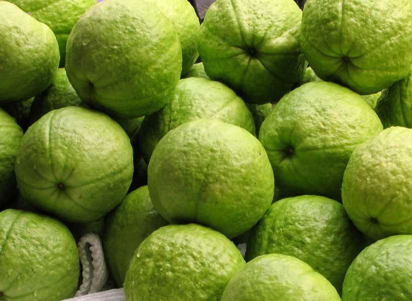Asian varieties of guava are often eaten green image by yali shi