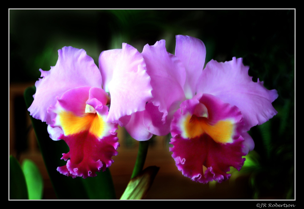 Are All Orchid Flowers Edible