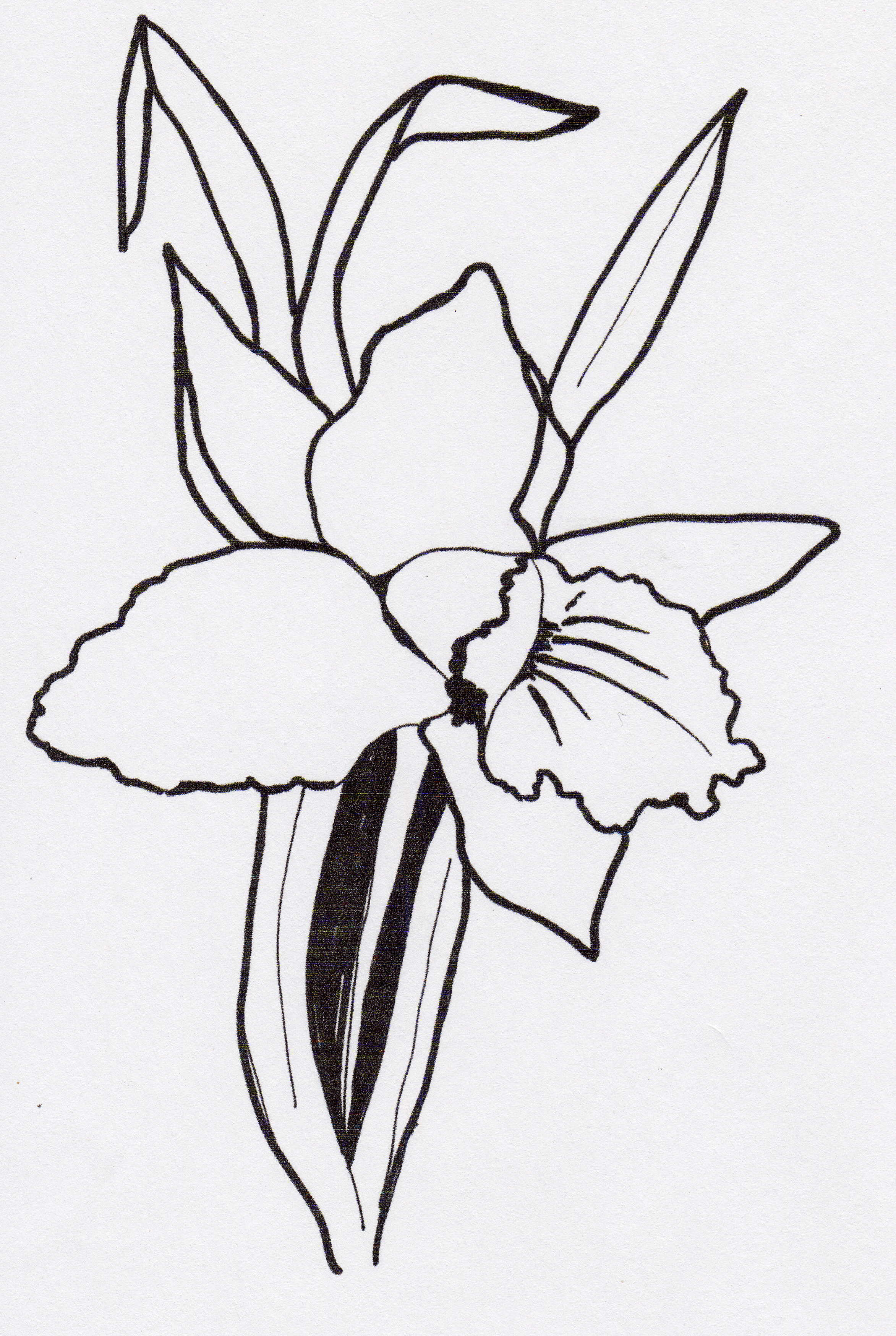 the gallery for gt simple orchid outline