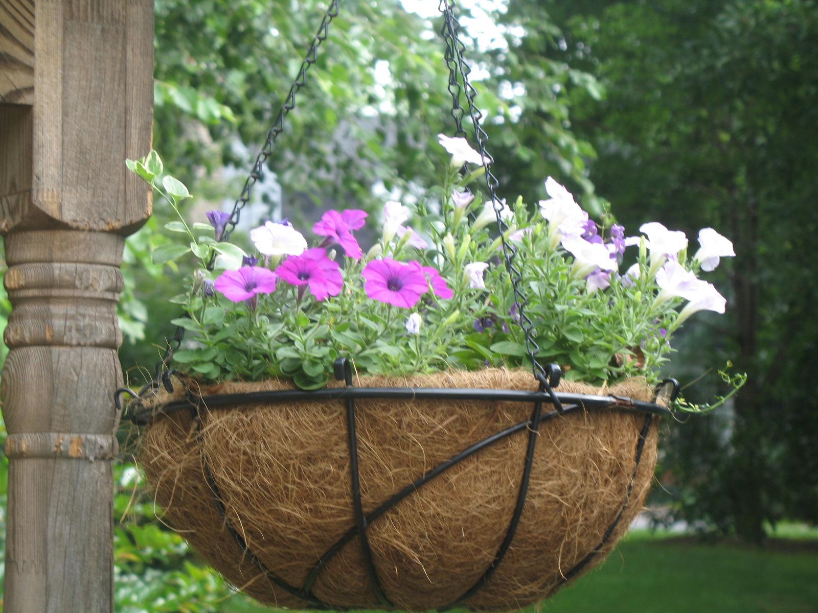 Flowers in flowerspictures hanging plants for summer - Summer hanging basket ideas ...