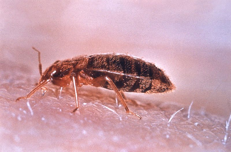 How To Kill Bed Bugs With Steam Ehow Uk