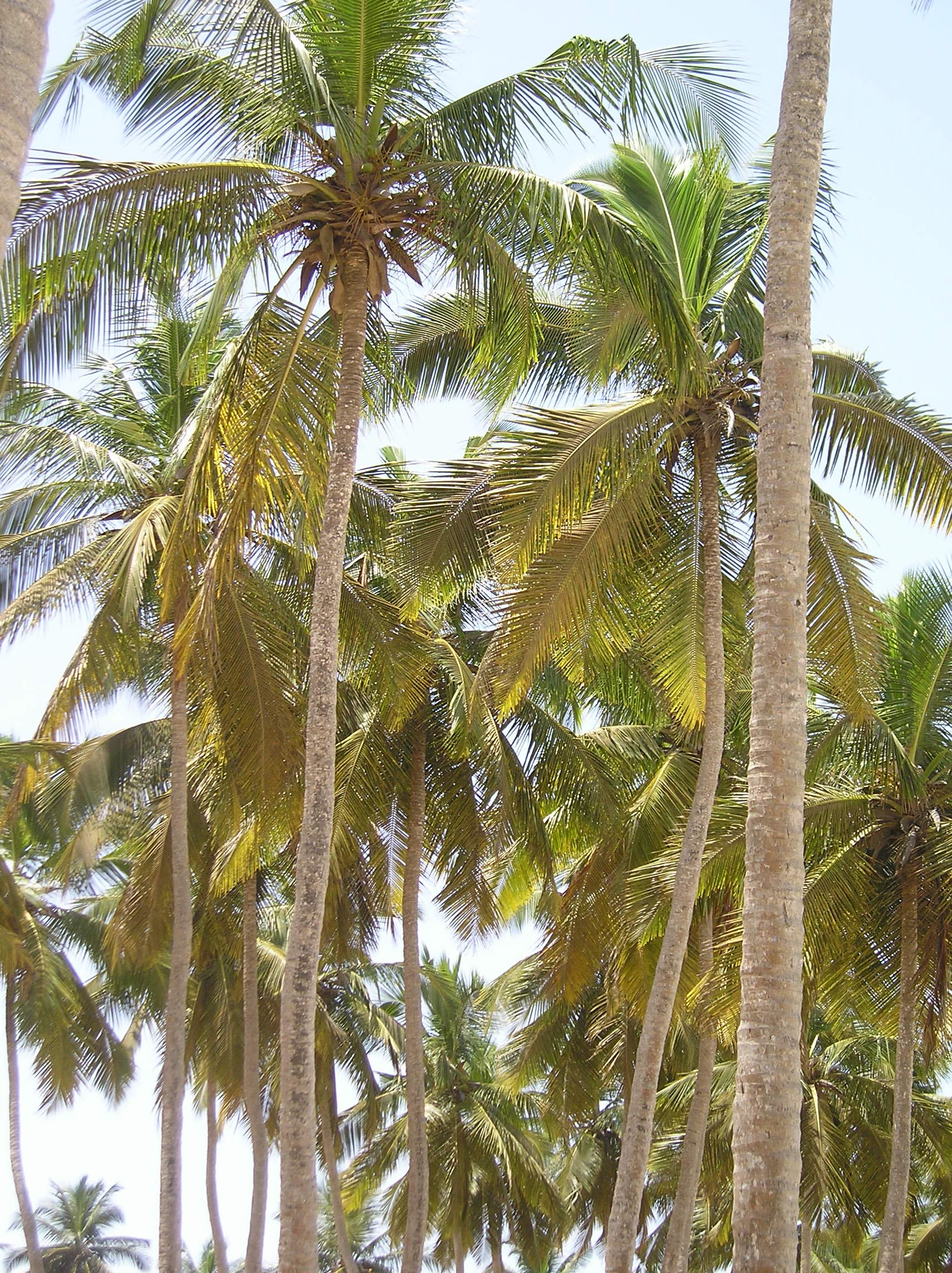 How To Care For A Potted Palm Tree Garden Guides