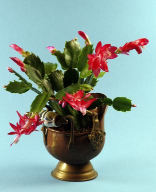 cactus plant care instructions
