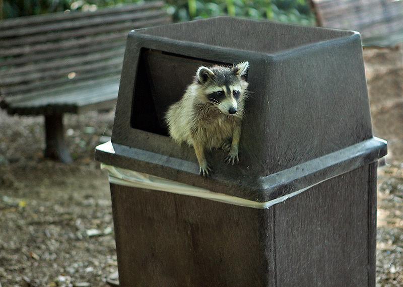 Homemade raccoon trap | eHow UK