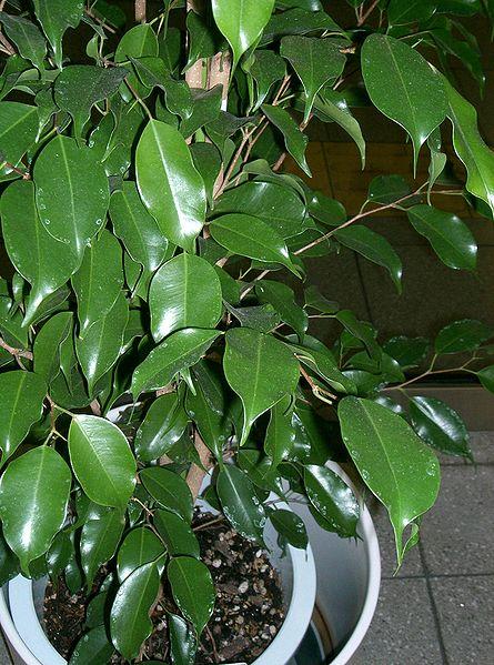 How to Prune Indoor Plants | Garden Guides