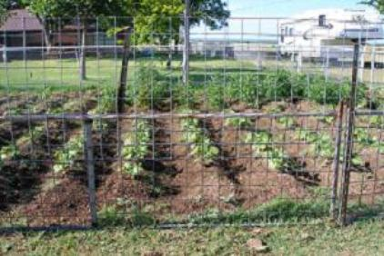 Vegetable Garden Ideas Layouts Plantings eHow UK