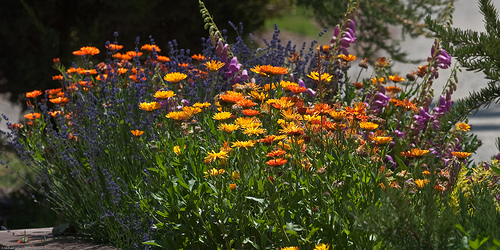 Easy Flower Garden Care Ideas image by mikebaird/flickr.com, author ...