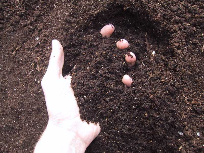 Topsoil garden guides for What is soil made out of