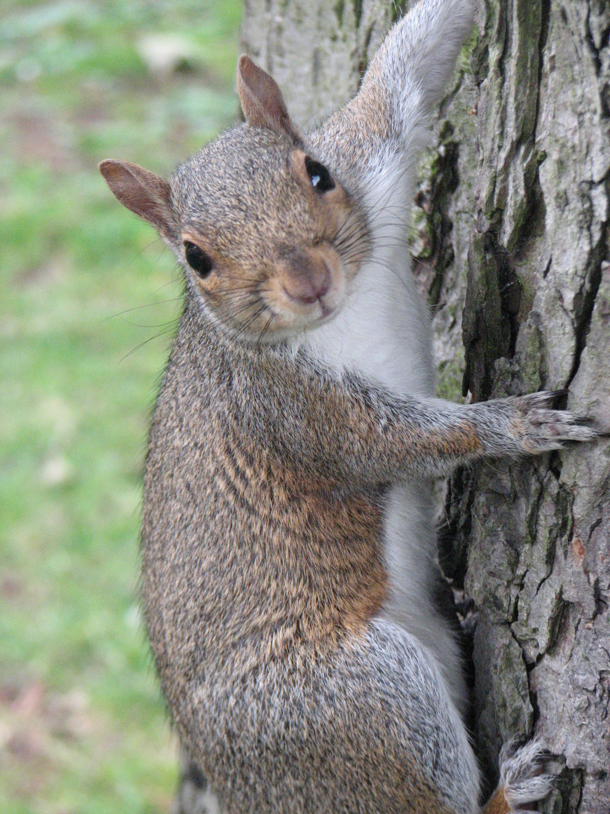 Home Remedies For Squirrel Pest Control Ehow Uk
