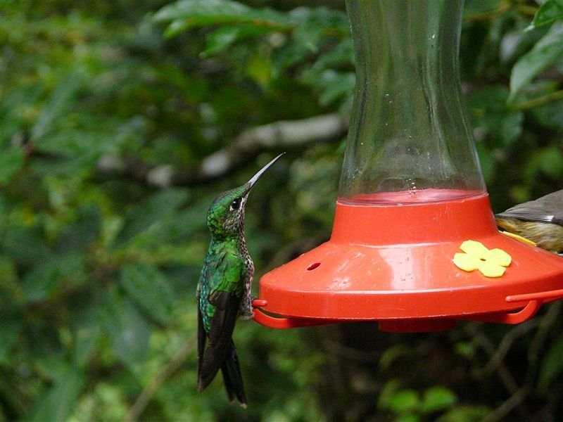 how to keep ants out of hummingbird feeders garden guides. Black Bedroom Furniture Sets. Home Design Ideas