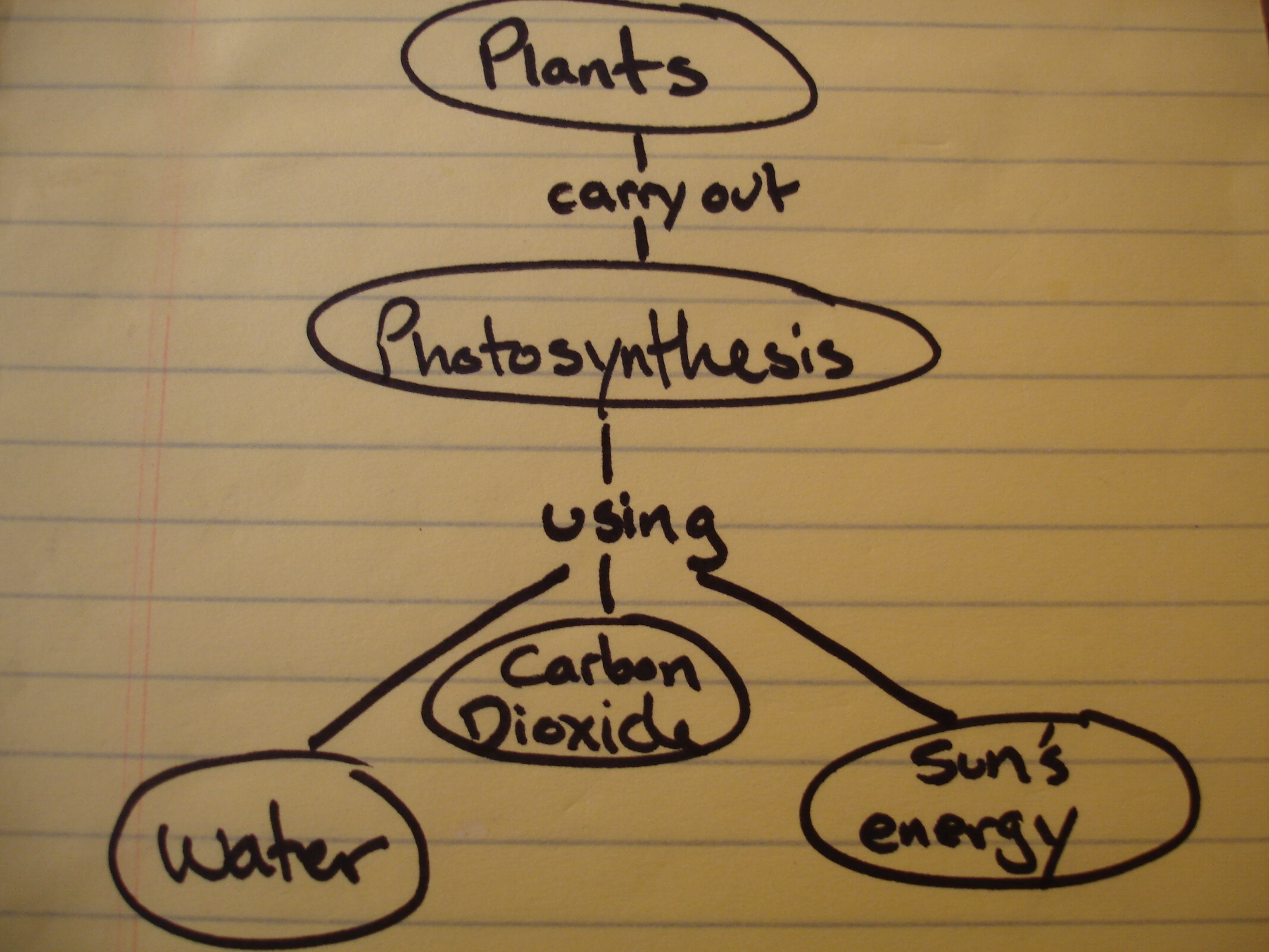 Photosynthesis+Concept+Map+Student How to make a concept map for ...