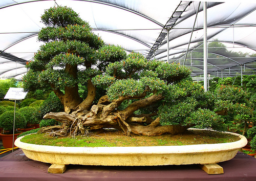 How to Take Care of a Bonsai Plant Garden Guides