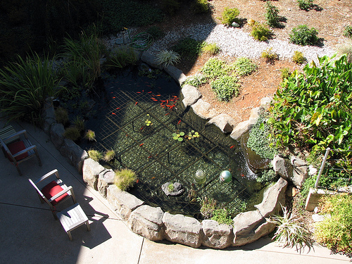 Taking care of fish ponds garden guides for Outdoor fish pond care