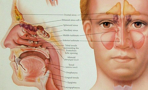 how to clear your sinuses with steam