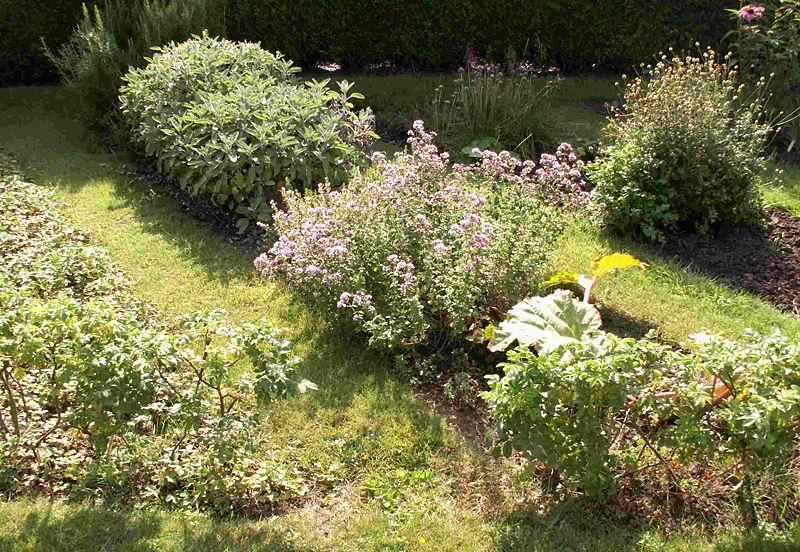 Herb Gardens for Beginners Garden Guides