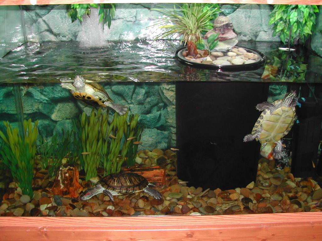 Как сделать аквариум своими руками в домашних для черепахи 69