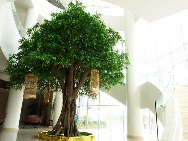Types of ficus trees garden guides - Alberi da interno ...