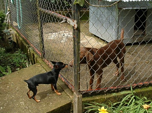 how to build a backyard kennel Our mickey & mollie welcome you and your 4 legged friends coming to inspect any of our kennels being built.