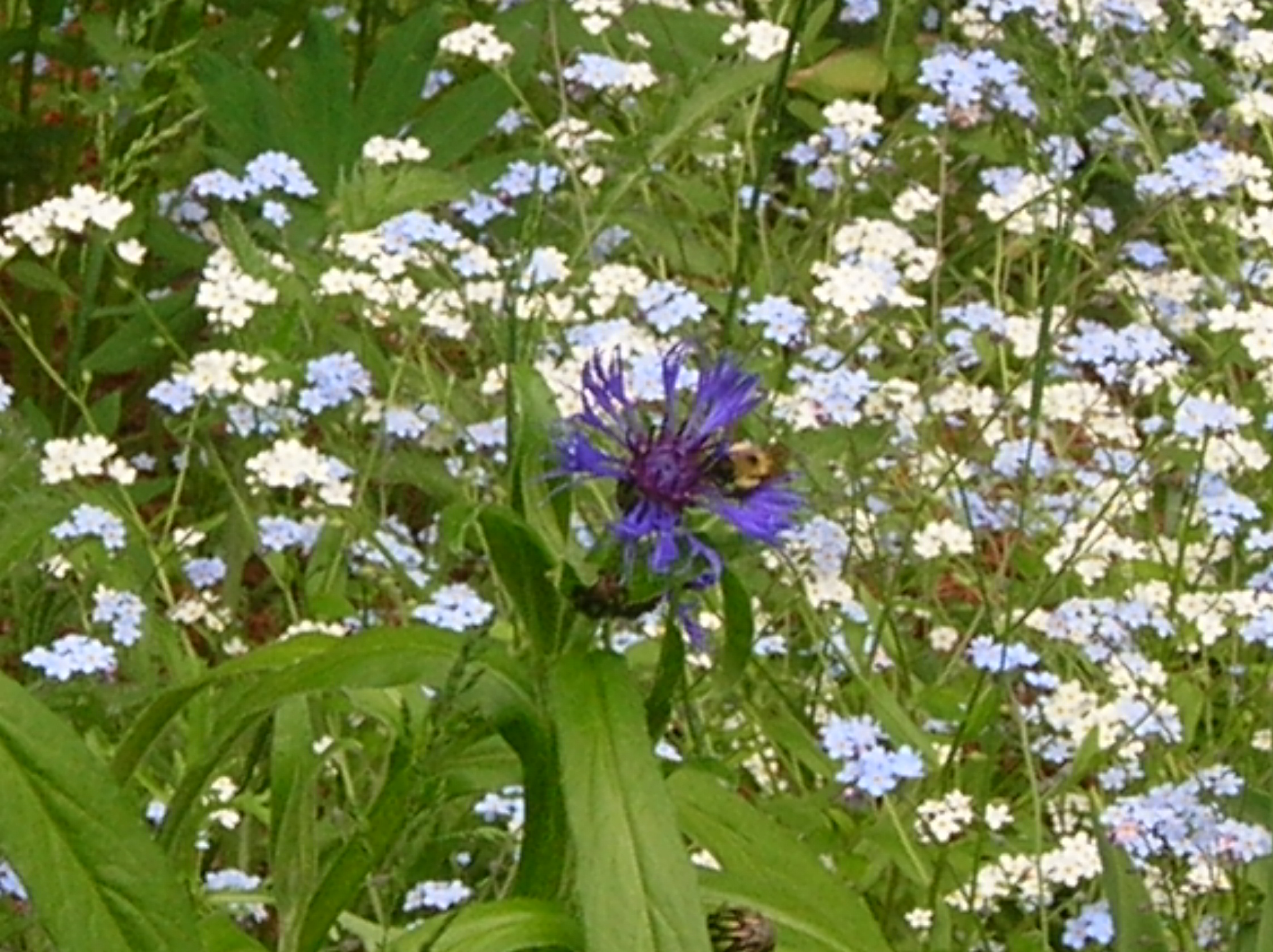 The Best Flowers To Plant In The Shade Garden Guides