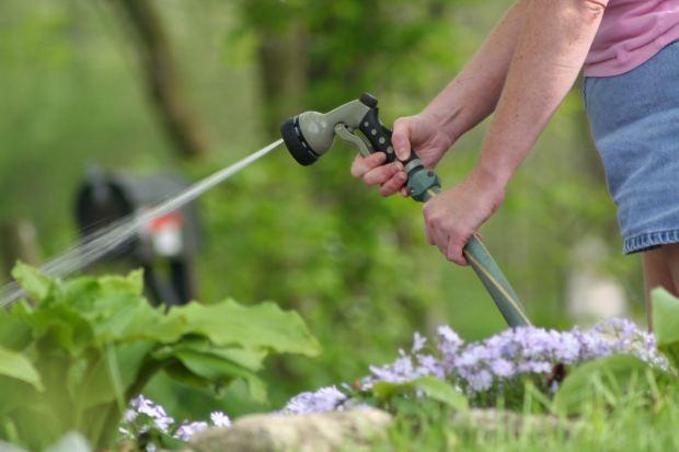 How Often Should I Water My Vegetable Garden Garden Guides